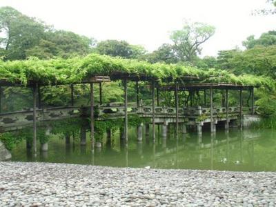 fujimoto201307(2)-5.jpg