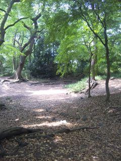 akasaka201205-54.jpg