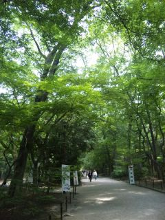 akasaka201205-55.jpg