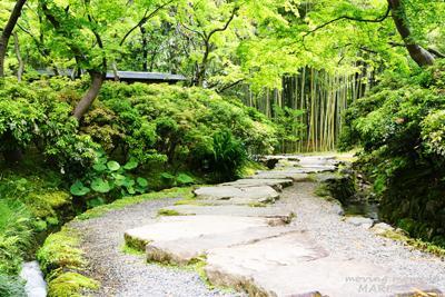 fujimoto201405-1(3).jpg